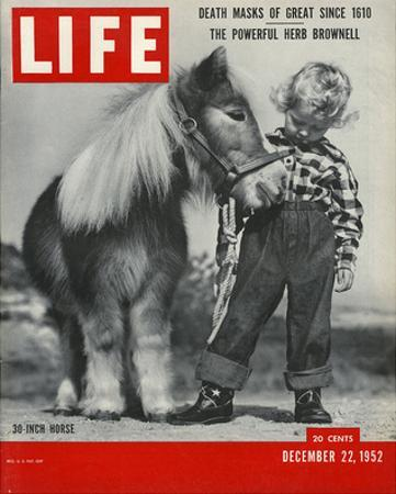 LIFE 30 inch Horse 1952
