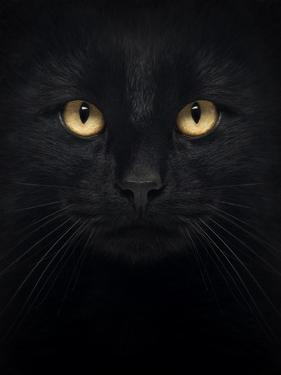 Close-Up Of A Black Cat Looking At The Camera, Isolated On White by Life on White
