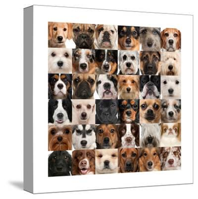 Collage Of 36 Dog Heads by Life on White
