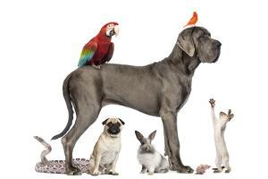Group Of Pets - Dog, Cat, Bird, Reptile, Rabbit, Isolated On White by Life on White