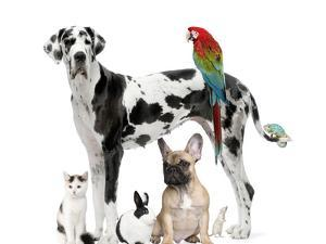 Group of Pets - Dog,Cat, Bird, Reptile, Rabbit by Life on White