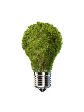 Light Bulb with Tree Inside Glass, Isolated on White Background