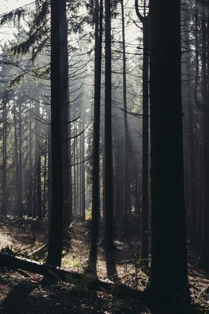 https://imgc.allpostersimages.com/img/posters/light-in-the-teutoburg-forest-in-oerlinghausen_u-L-Q1EXMH00.jpg?artPerspective=n