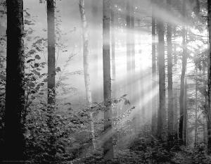 Light Through The Trees II