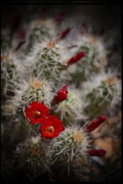 Desert Flower 6 by LightBoxJournal