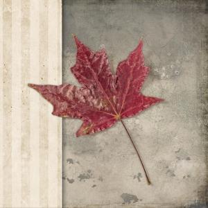 Lodge Leaf 1 by LightBoxJournal