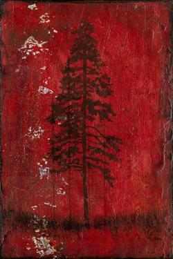 Lodge Pole Pine by LightBoxJournal