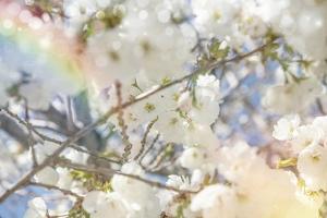 White Spring Blossoms 09 by LightBoxJournal
