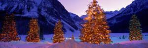 Lighted Christmas Trees, Chateau Lake Louise, Lake Louise, Alberta, Canada