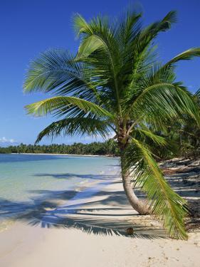 Palm Tree on Tropical Bavaro Beach, Dominican Republic, West Indies, Caribbean, Central America by Lightfoot Jeremy
