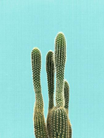 Cactus On Blue by LILA X LOLA