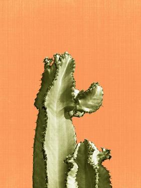 Cactus On Orange by LILA X LOLA