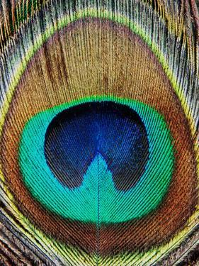 Peacock Feather by LILA X LOLA