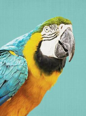 Tropical Parrot by LILA X LOLA