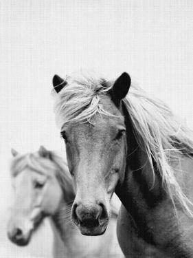 Wild Horses 1 by LILA X LOLA