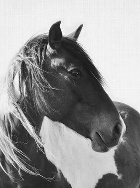 Wild Horses 2 by LILA X LOLA