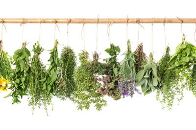 Fresh Herbs Hanging Isolated on White. Basil, Rosemary, Thyme, Mint by LiliGraphie