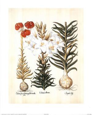 Lilium II (Flowers) Art Print Poster