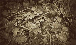 Autumn Leaves by Lillian Bell