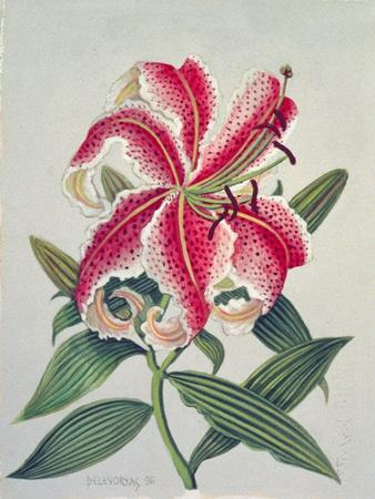 Botanical Lily, 1996