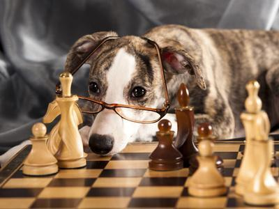 Puppy To Play Chess