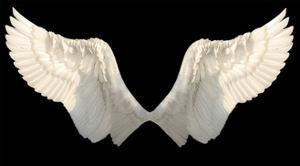 Two Wings Isolated by Lilun