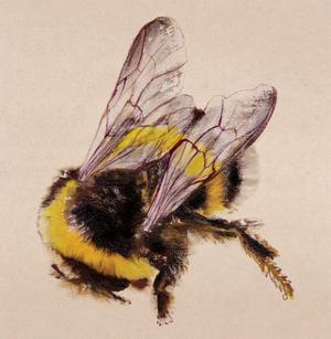 Bee by Lily Greenwood