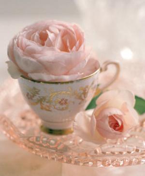 Pale Pink II by Lina Ricci