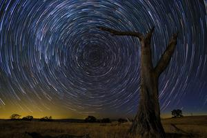 Tree, Night Sky, Celestial by Lincoln Harrison
