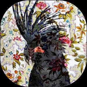 Black Parrot by Linda Arthurs