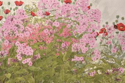 Pink Phlox and Poppies with a Butterfly