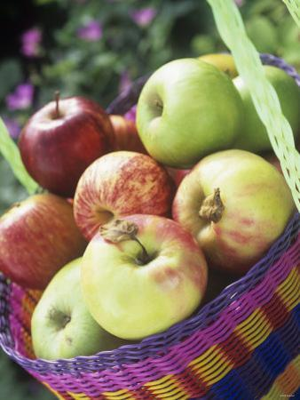 Apples (Granny Smith and Gala) in a Basket by Linda Burgess