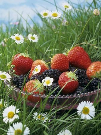Bowl of Strawberries and Blackberries in Grass with Daisies by Linda Burgess