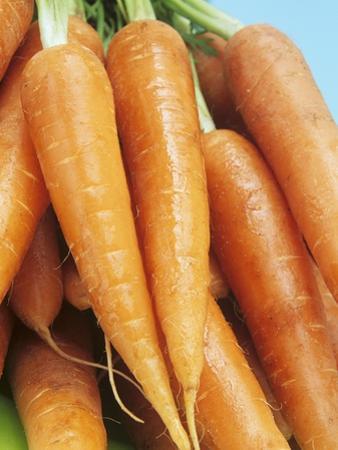Fresh Carrots by Linda Burgess