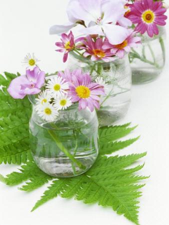 Geraniums and Chrysanthemums in Jars with Fern by Linda Burgess