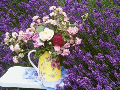 Roses on a Stool in a Field of Lavender by Linda Burgess