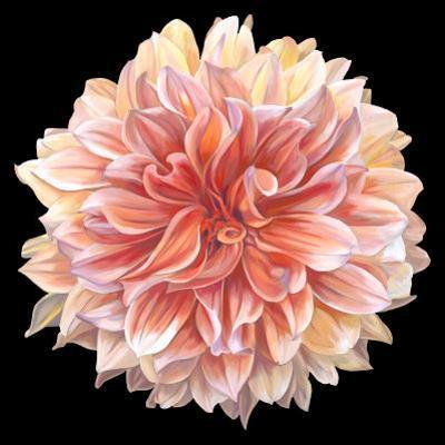 Orange Dahlia by Linda Mcvay