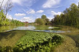 Split Level View of the River Itchen, with Blunt-Fruited Water-Starwort and Itchen Stoke Mill, UK by Linda Pitkin