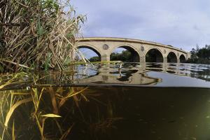 Split-Level View of the River Tweed and Coldstream Bridge, Berwickshire, Scotland, UK, October by Linda Pitkin