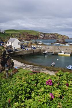 St Abbs Harbour (St Abbs and Eyemouth Voluntary Marine Reserve), Berwickshire, Scotland, August by Linda Pitkin