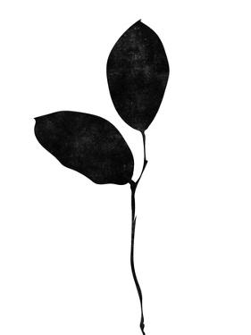 BW Leaves I by Linda Woods