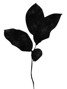 BW Leaves II by Linda Woods