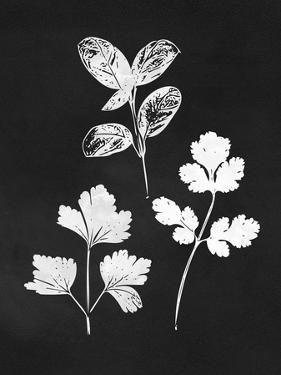 Herb Trio by Linda Woods