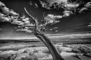 Desert Tree by Linden Sally