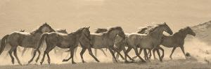 Horse Parade by Linden Sally