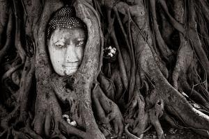 Buddha Head In Tree At Ayutthaya, Thailand by Lindsay Daniels