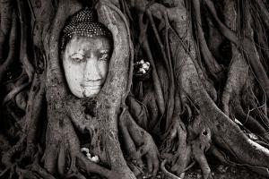 Buddha Head In Tree At Ayutthaya, Thailand by Lindsay Daniels