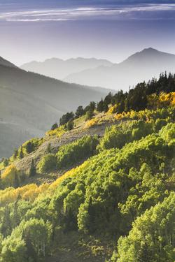 Fall in Big Cottonwood Canyon, Utah by Lindsay Daniels