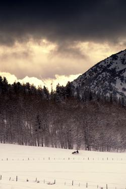 Snowmobiler Riding At Sunset In The Mountains by Lindsay Daniels