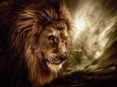 https://imgc.allpostersimages.com/img/posters/lion-against-stormy-sky_u-L-Q103BDC0.jpg?p=0